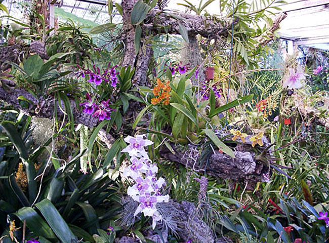 At The Orchid Garden, You Will Find A Little Bit Of Everything Ranging From  Large Spectacular Orchids To Miniature Orchid. The Laboratory Where These  ...