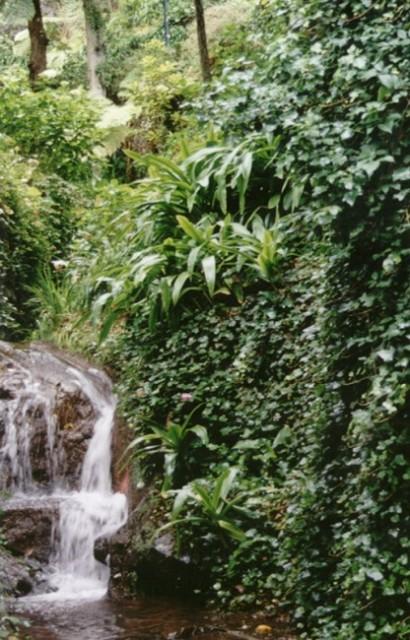 Madeira Monte Municipal Park Funchal